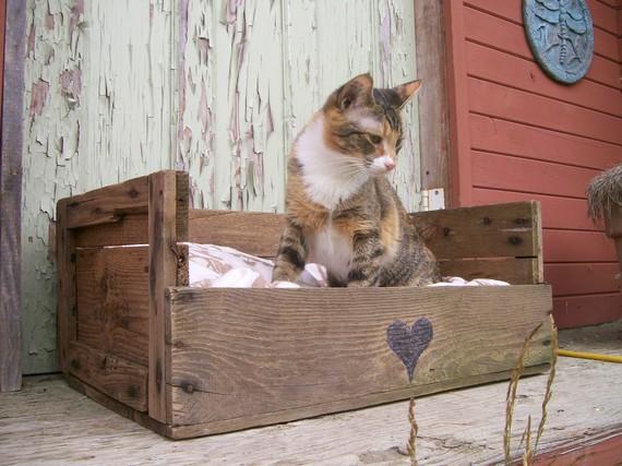 Niche pour le chat en palettes