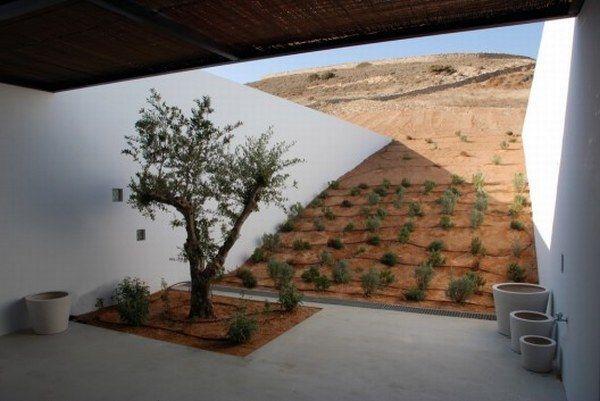 Olivier dans maison moderne en grece