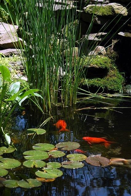 idee-bassin-jardin-18