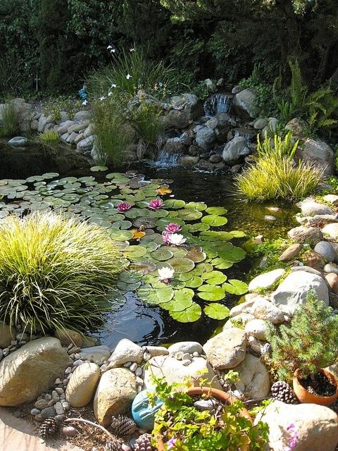 idee-bassin-jardin-21