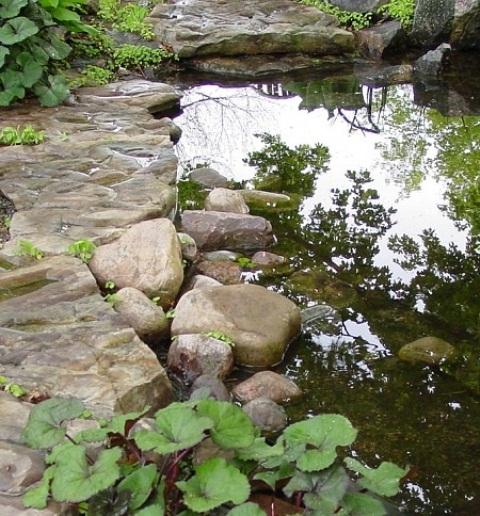 idee-bassin-jardin-35